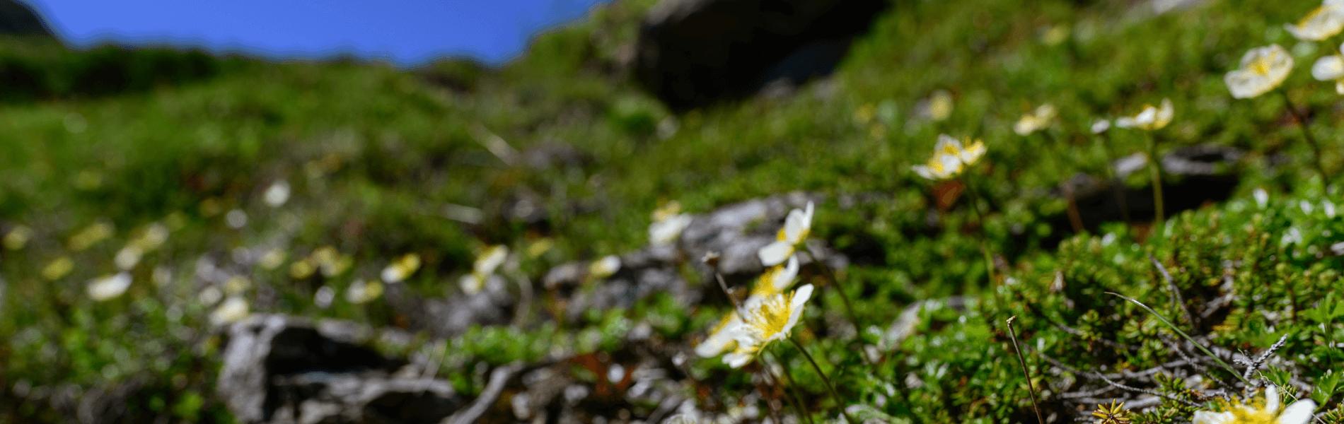 山に咲く野草